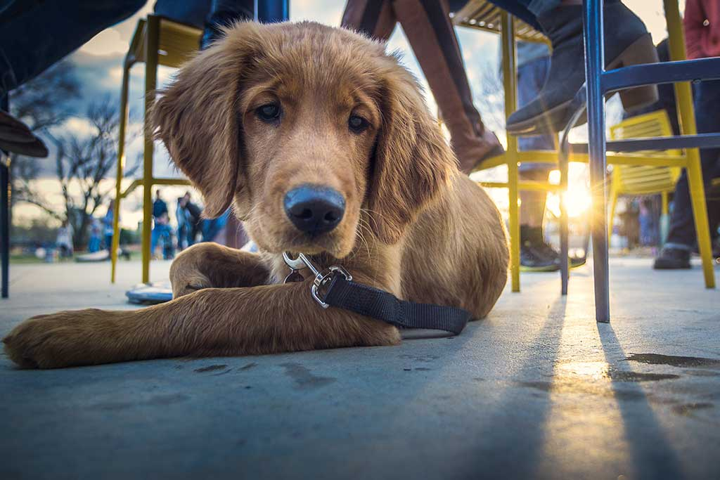 Dog relaxing under table