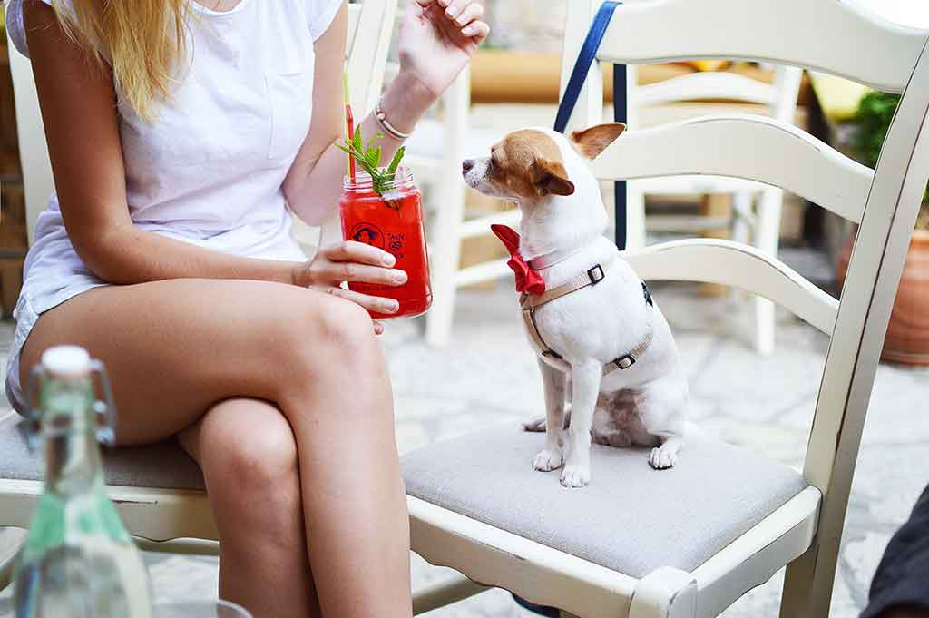 Dog and owner sitting in a bar