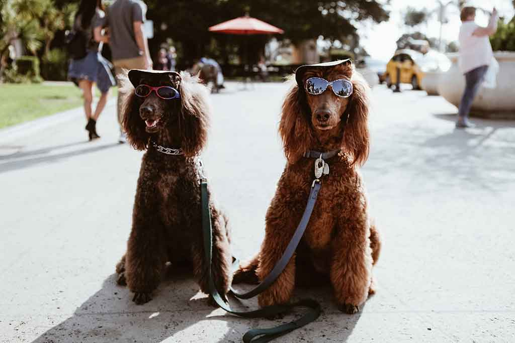 Two dressed up dogs in the city