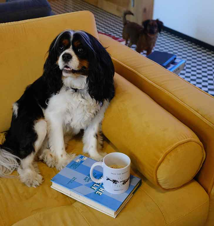 Dog sitting on sofa with a cup