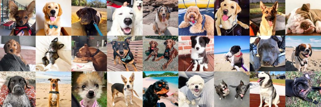 Dogs of Australia Header Image with Featured Dogs