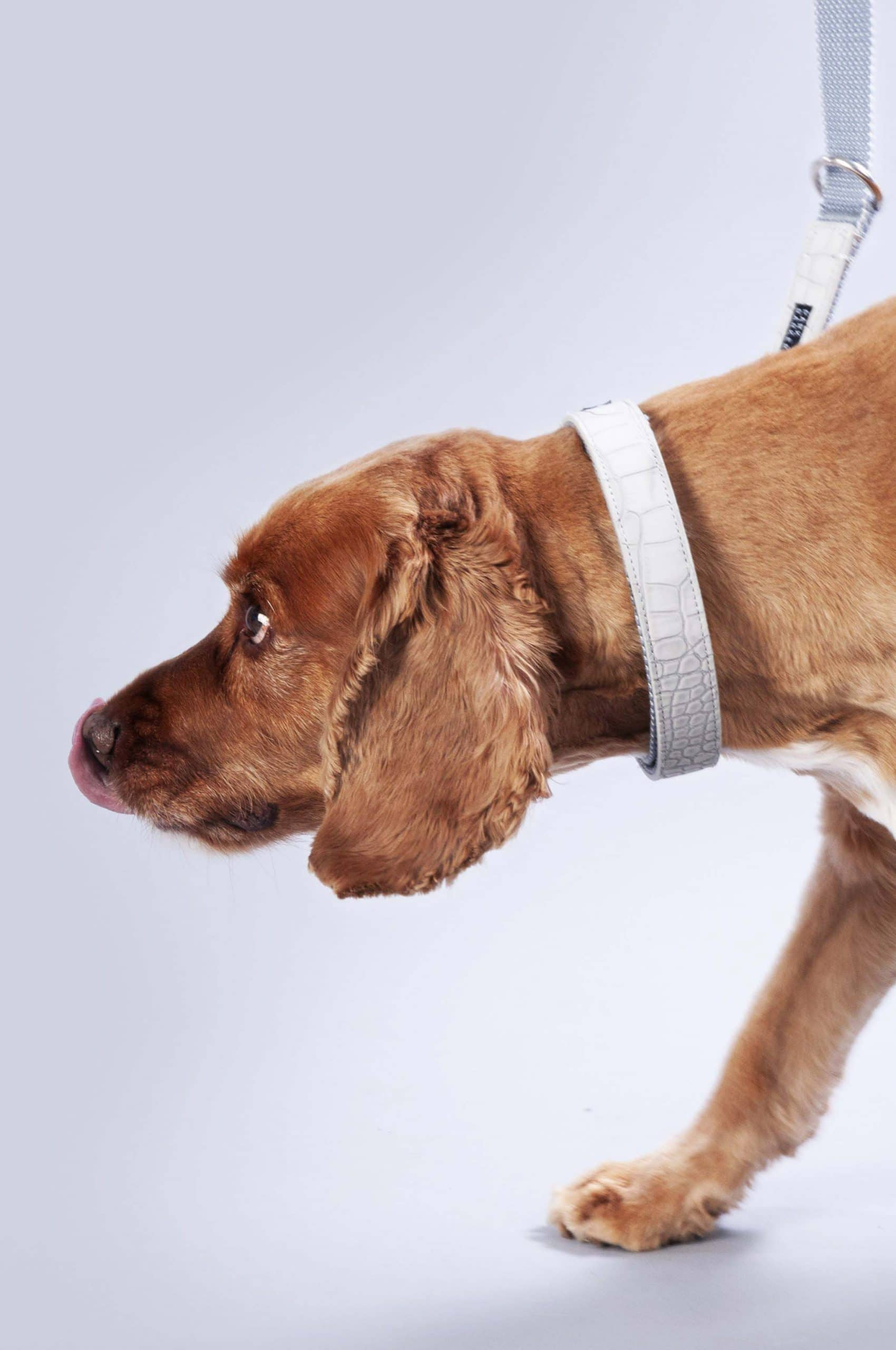 Dog wearing grey The Hyde dog collar from Park Barkers