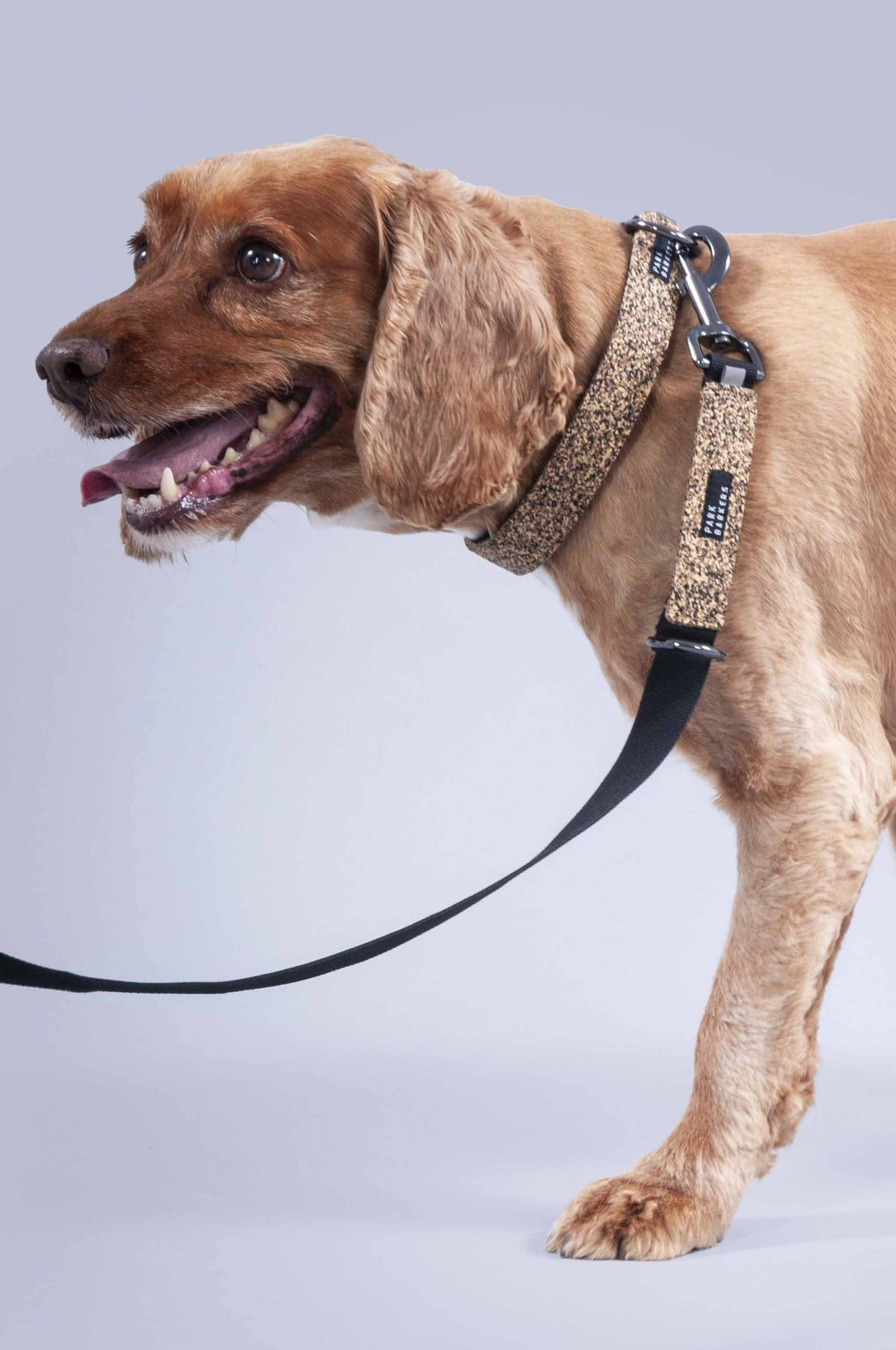 Dog wearing tan dog collar and leash set from Park Barkers