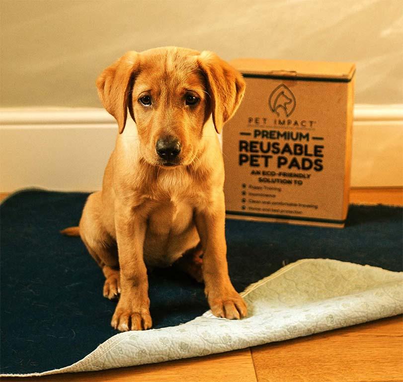 Dog sitting on reusable puppy pad