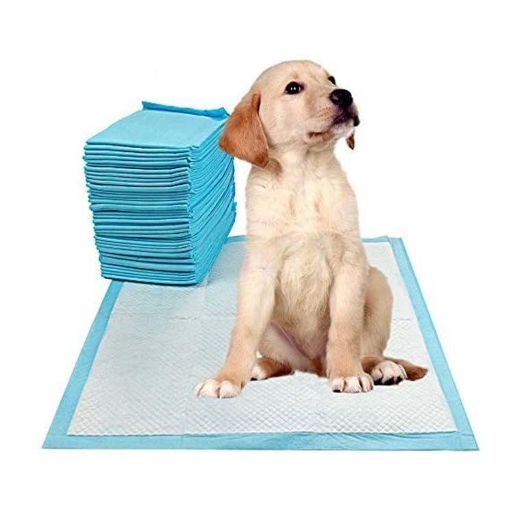 Puppy sitting on Puppy Pad