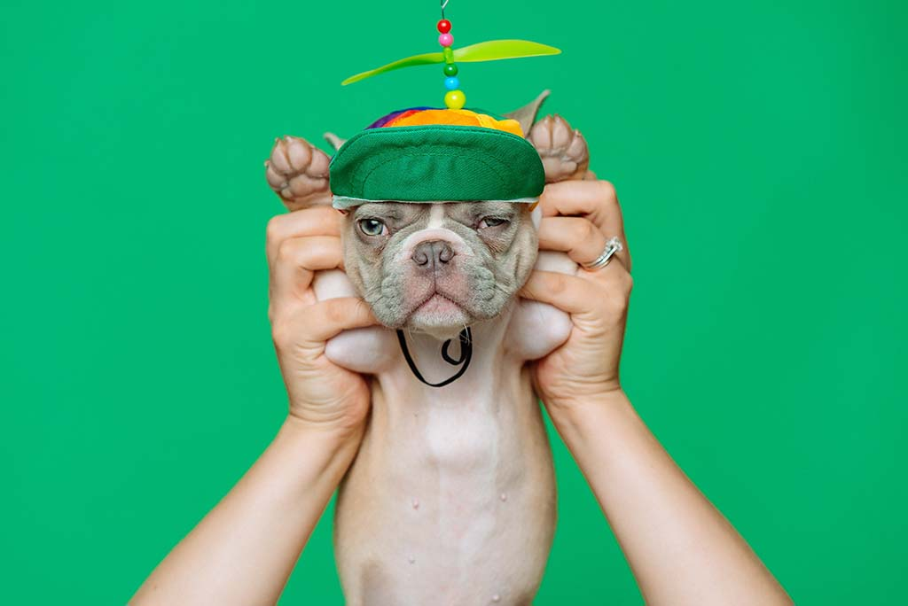 Puppy wearing a green hat