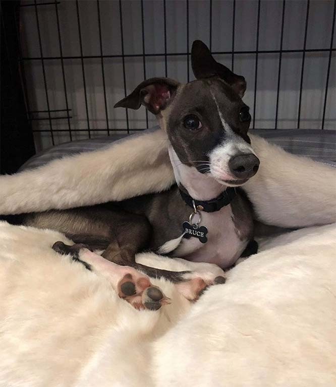 Dog posing in dog cave bed