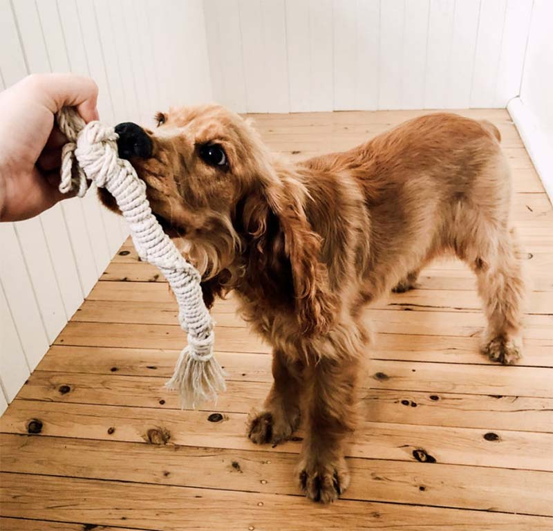 Dog playing with rope toy