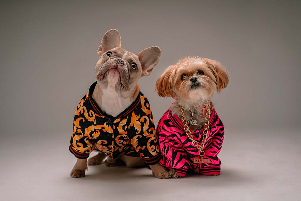 Two dogs posing