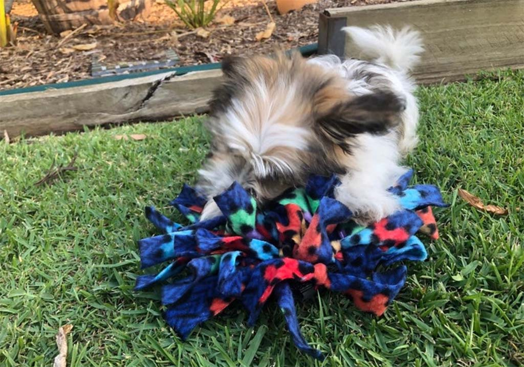 Dog snuffle mat from Queensland