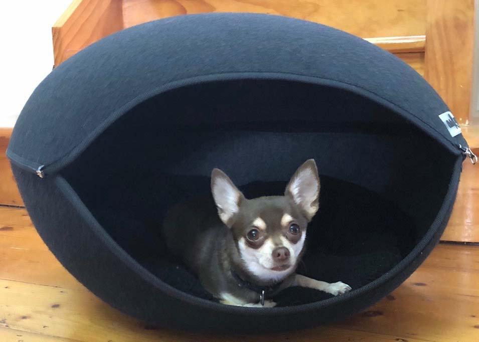 Chihuahua inside a dog pod