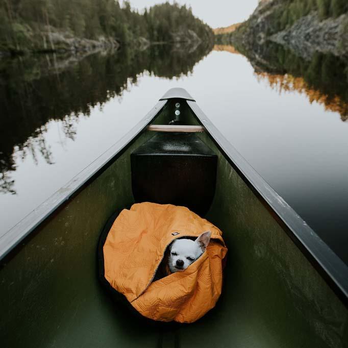 Dog on a kayak inside a sleeping bag