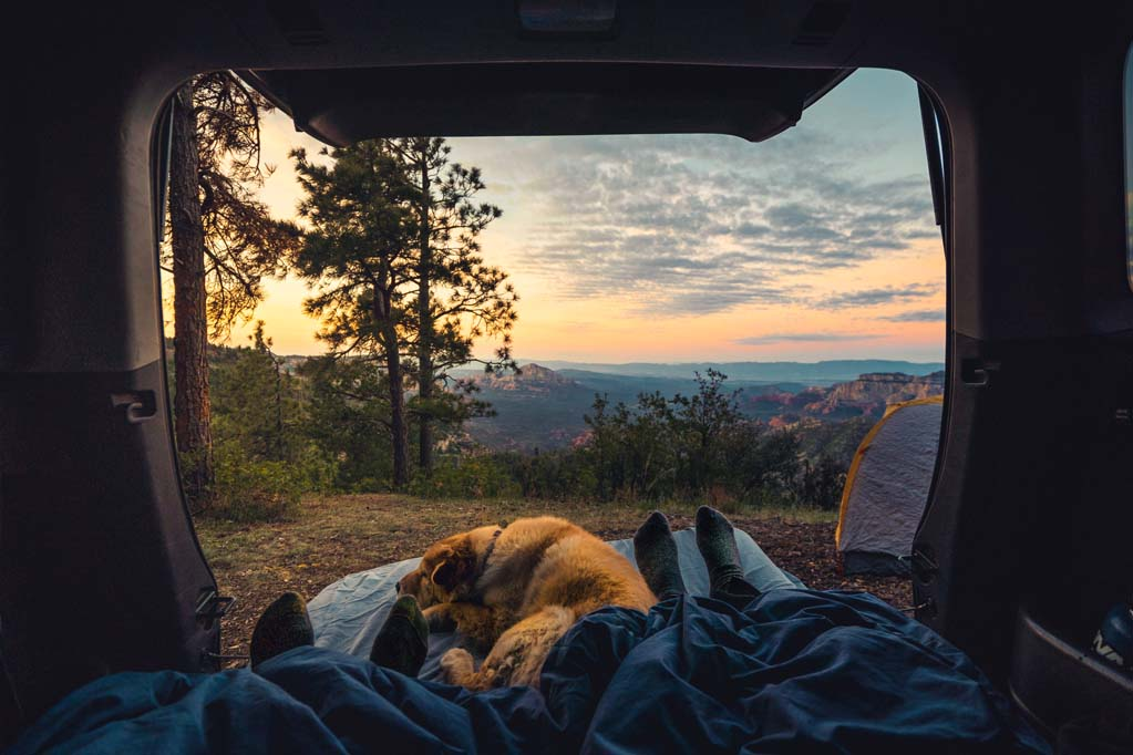 A dog relaxing on a camping trip