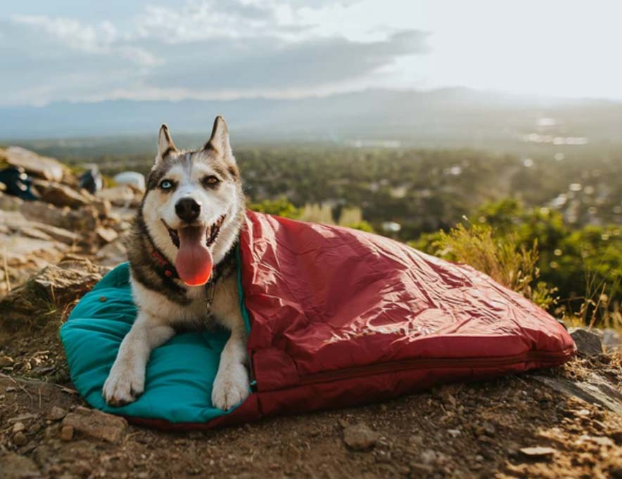 A dog in a sleeping bag from the brand Wilder Dog