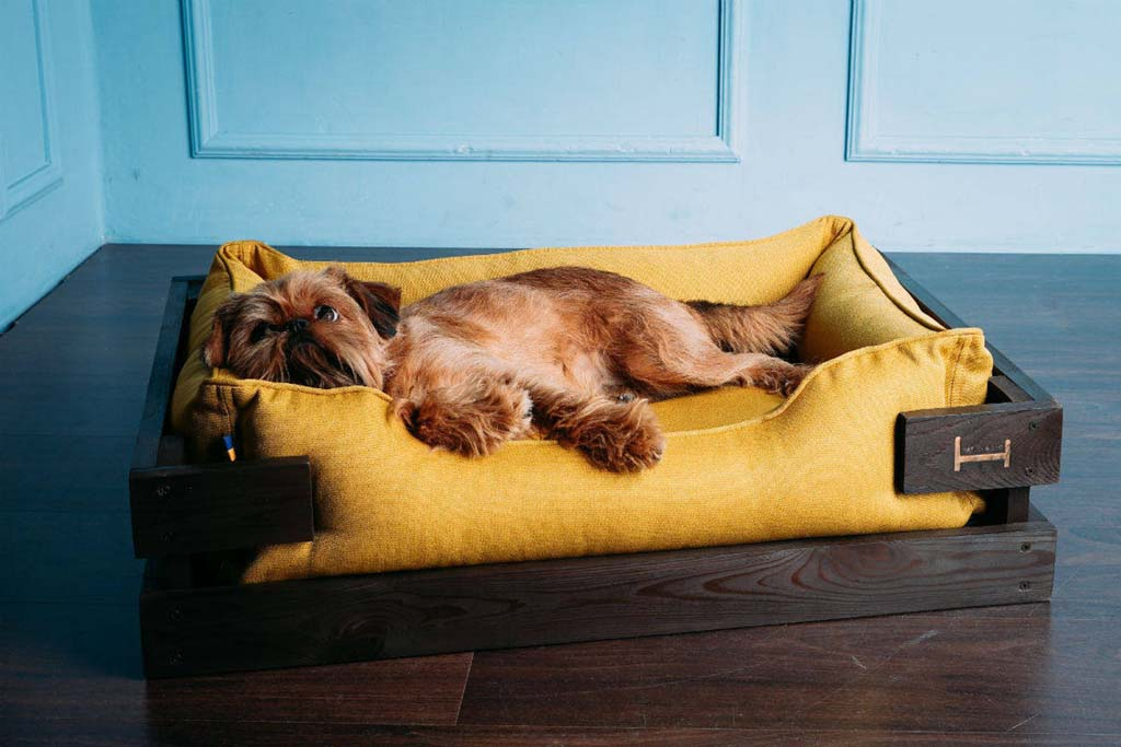 Dog relaxing on wooden bed