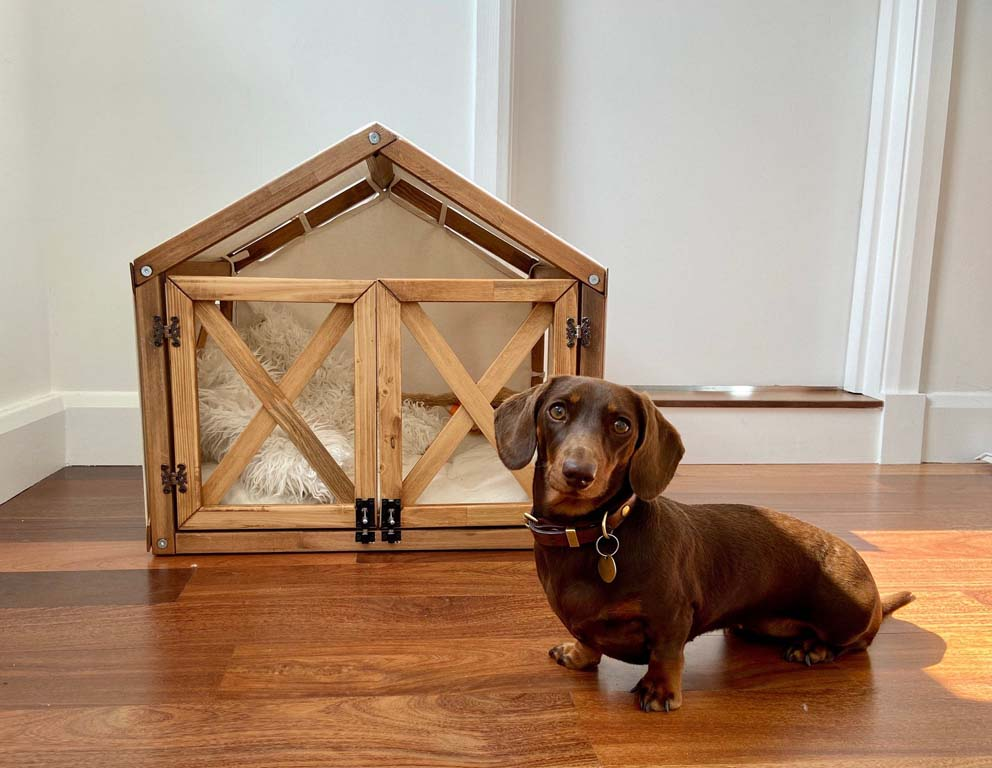 Dachshund posing in front of wooden dog house
