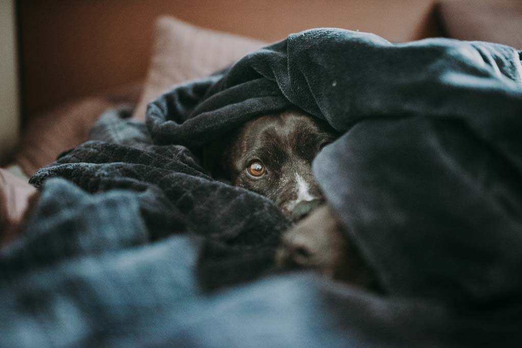 Dog peeking out under covers, cave