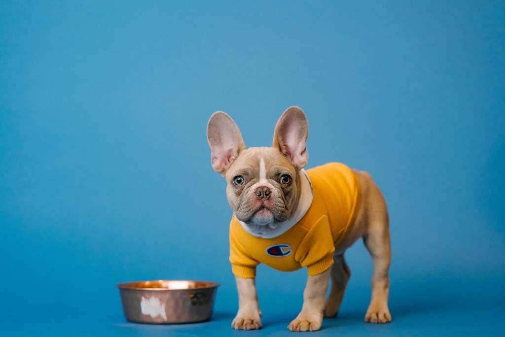 Dog standing next to dog bowl