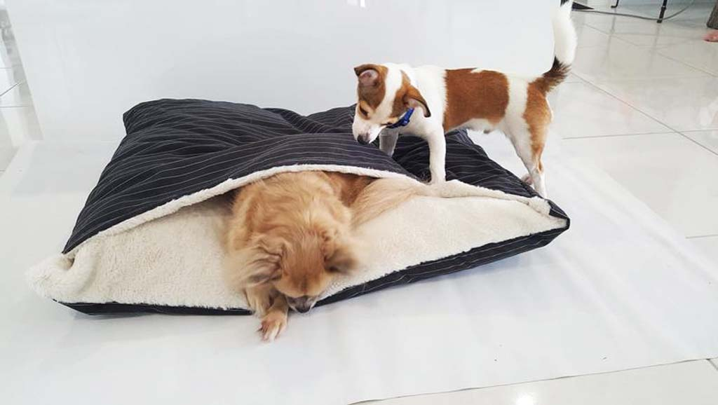 Two dogs investigating a cave bed