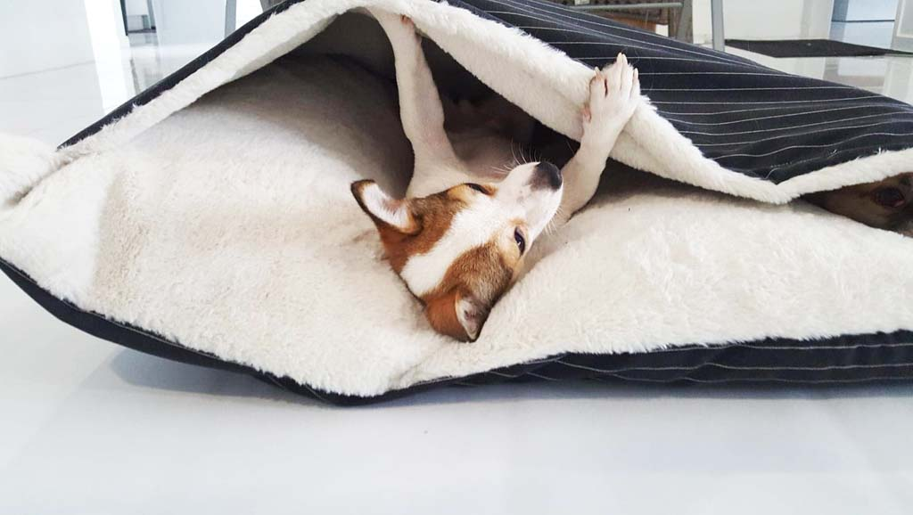Dog getting comfortable in cave bed