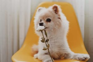 Dog posing with flower