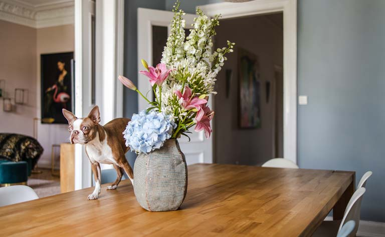 Dog standing on table next to flowers