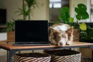 dog next to computer